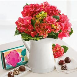 Hydrangea Plant in Pitcher with Chocolates