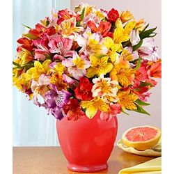 100 Blooms of Peruvian Lilies in Coral Vase