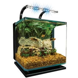 Contour Glass 3 Gallon LED Aquarium Kit