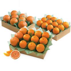 Large Family Size Key Biscayne Oranges
