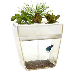 AquaFarm Self-Cleaning 3 Gallon Fish Tank