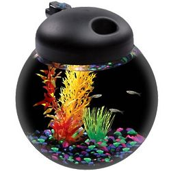 Aquarius LED Light Globe Bowl Aquarium