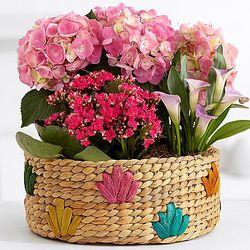 Pink Flowering Market Garden