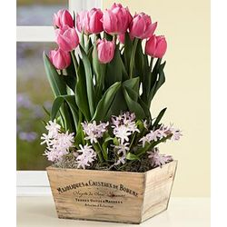 Positively Pink Bulb Garden