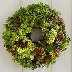 Small Living Succulent Wreath