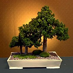 Forest Group Style Preserved Juniper Bonsai Tree