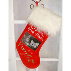 Cat Picture Christmas Stocking