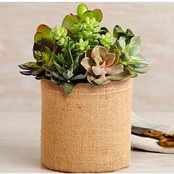 Succulent Garden in Burlap Wrapped Cylinder