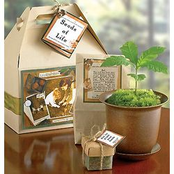 Seeds of Life Sympathy Gift Box