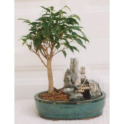 Ficus Bonsai and Stone Landscape Scene with Fishing Pole