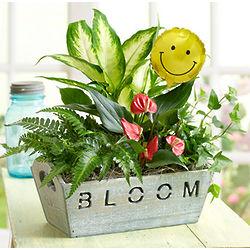 Send a Smile Plant Garden