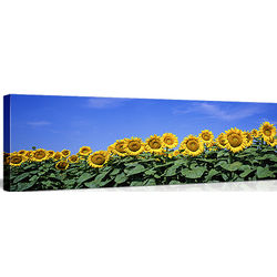 Field of Sunflowers on Canvas