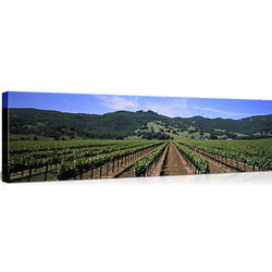 Napa Valley Vineyards on Canvas