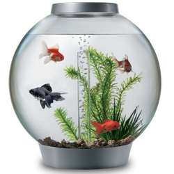 4 Gallon Silver Aquarium Starter Kit