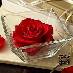 Infinite Red Rose Bloom
