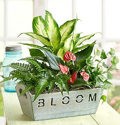 Bloom Planter with Mini Garden