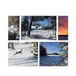 Winter Collection Note Cards