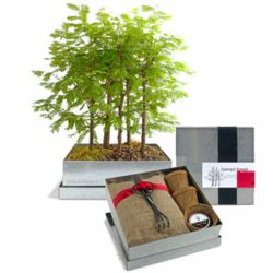 Grow Your Own Bonsai Forest Kit