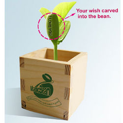 Talking Bean Growing Kit