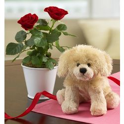 Doggone Cute Rose Plant