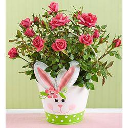 Hoppy Easter Bunny Rose Plant