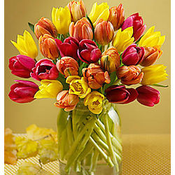 30 Autumn Tulips Bouquet
