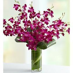 Orchid Embrace Bouquet