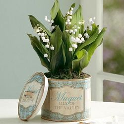 Vintage Lily of the Valley Bulb Garden