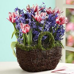 Bright Spring Bulb Basket