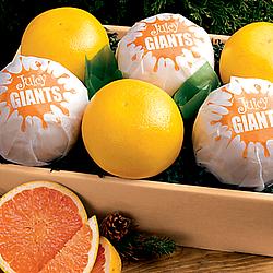 6 Giant Grapefruit