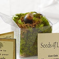 Oak Tree Seedling Favors with Bronze Ribbon