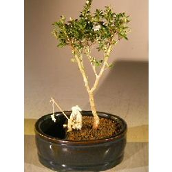 Flowering Mount Fuji Bonsai Tree with Water Land Container