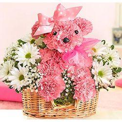 Princess Paws Pink Carnation Floral Arrangement