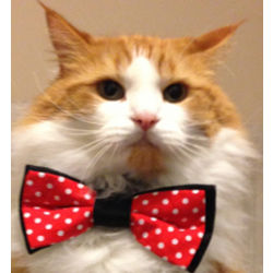 Cat or Dog Bow Tie