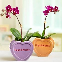 Conversation Heart Mini Orchid