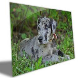 Photo to Brushed Aluminum Art Print