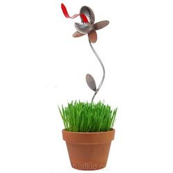 Desktop Garden Venus Fly Trap