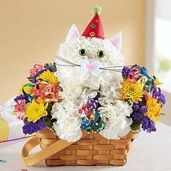 Purrfect Party Cat Bouquet