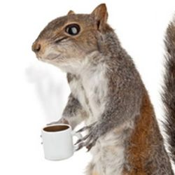 Squirrel Sized Coffee Cup