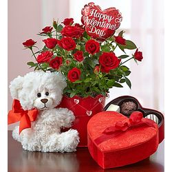 Bundle of Love Rose Plant with Bear & Chocolate