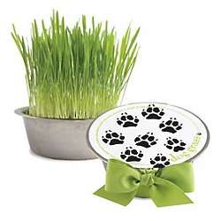 Bow-Wow Barley Grass For Dogs