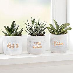 Dig It Succulent Trio