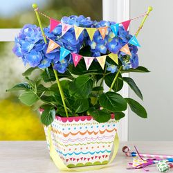 Happy Hydrangea Birthday Plant