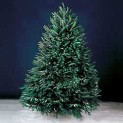 Freshly Cut 5-Foot Christmas Tree