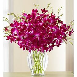 Exotic Breeze Orchids in Clear Vase