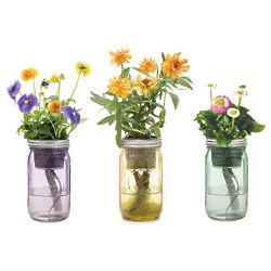 Mason Jar Indoor Flower Garden