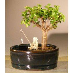 Baby Jade Bonsai Tree with Fisherman Figurine