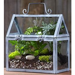 Miniature Greenhouse Terrarium Kit