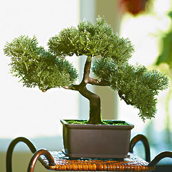 Faux Bonsai Tree