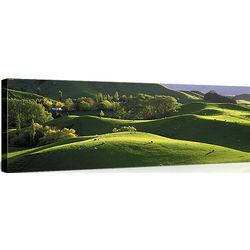 Grazing Land New Zealand Canvas